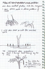 Mangrovewalksketches.jpg