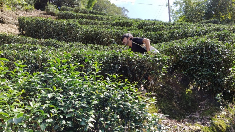 Tea expedition Toru in field.jpg