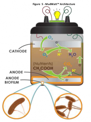 Diy Microbial Fuel Cells Hackteria Wiki